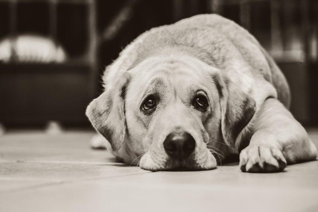 chien maladie