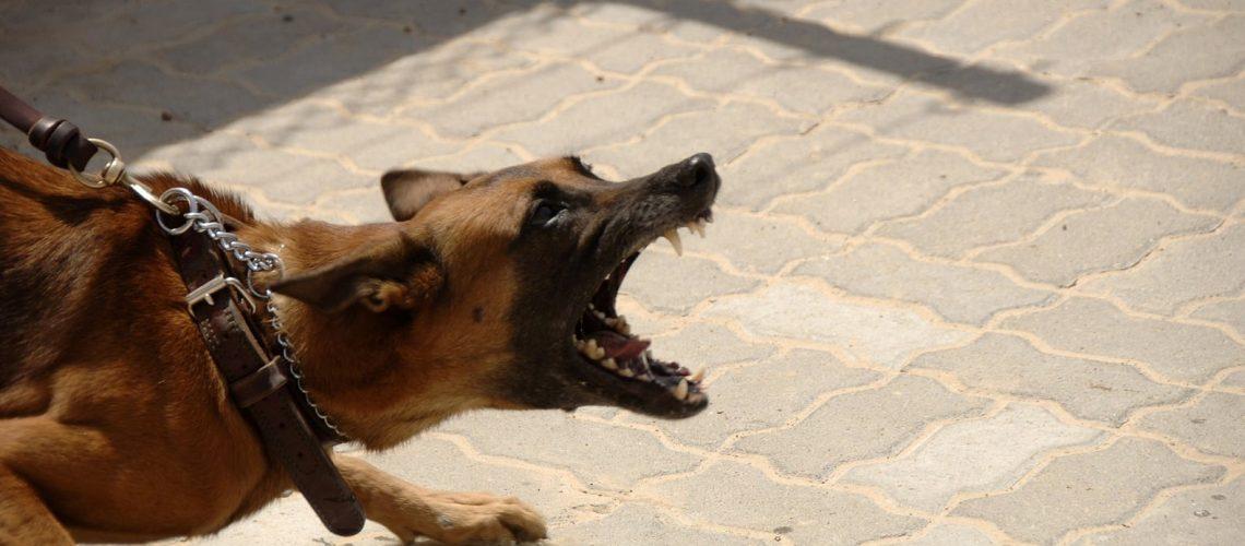mon chien mord que faire