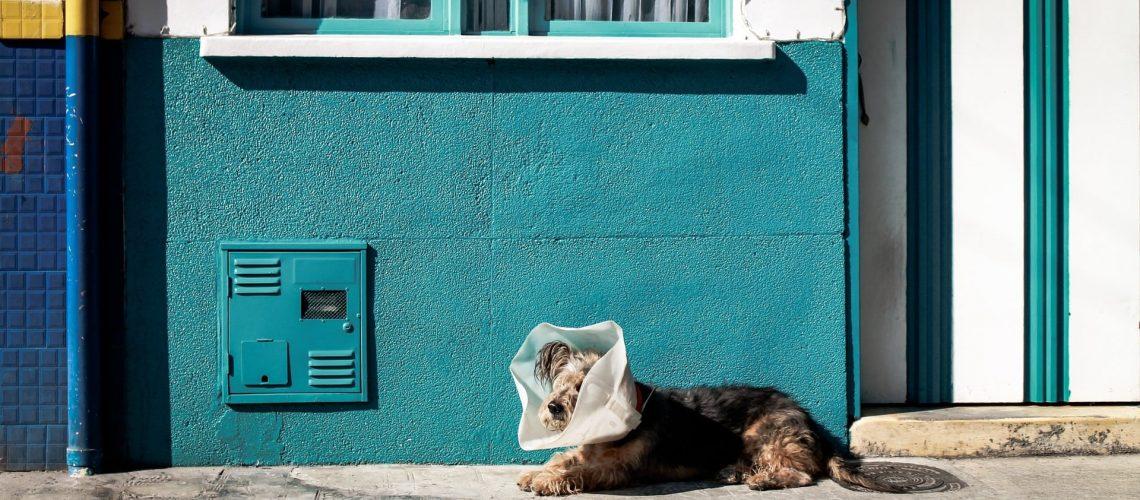 chien vaccin
